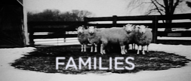 families-banner