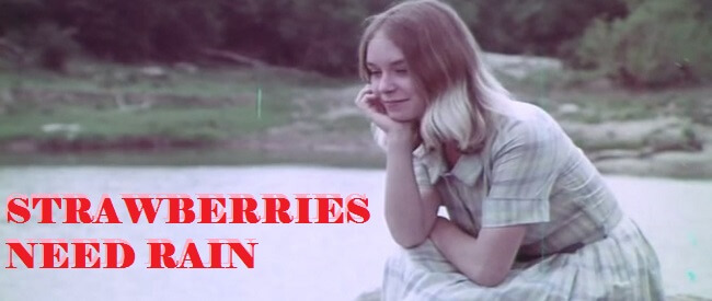 Strawberries_Need_Rain_Banner